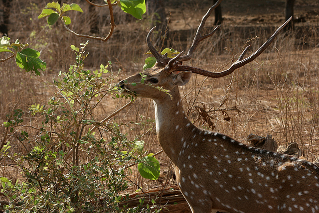 10 Best Things to Do in Gir National Park